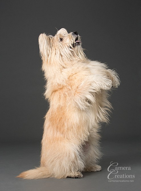 Beautiful dog portrait at Camera Creations photography studio in Los Angeles. #dogphotography #petphotography