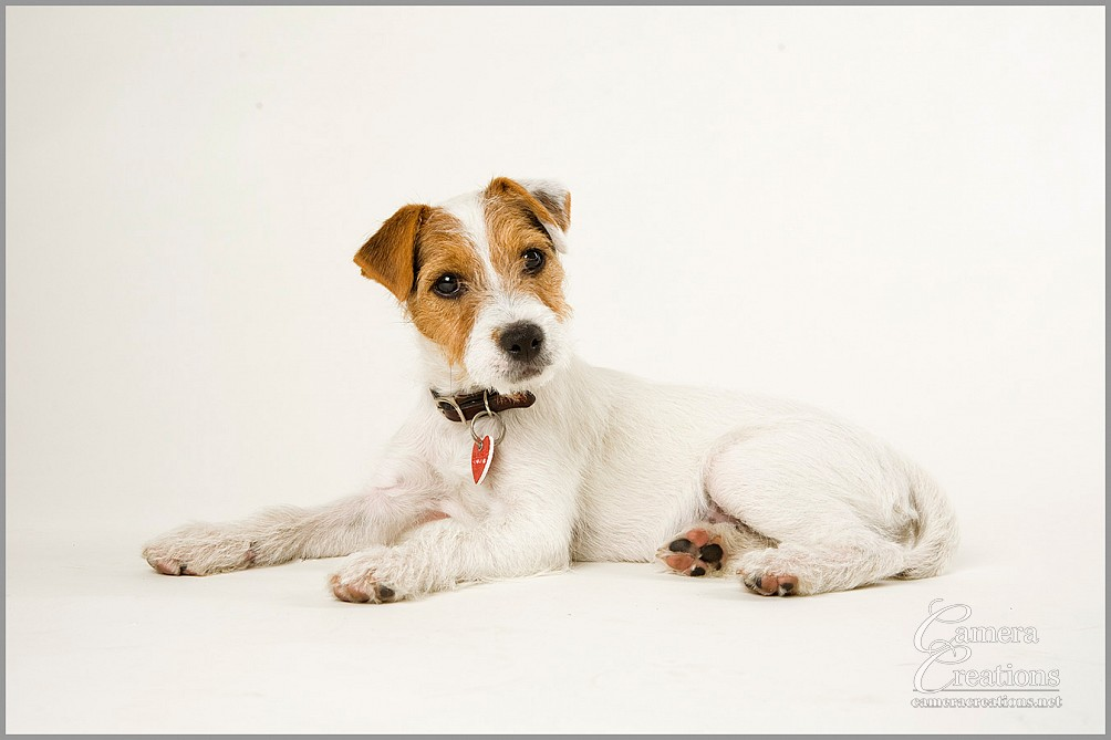 Pet photography session in Los Angeles at Camera Creations LLC.